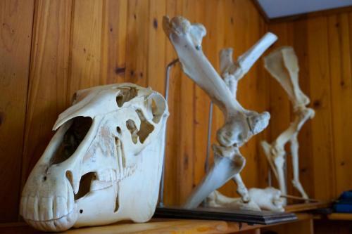 Anatomy - Barn Decor
